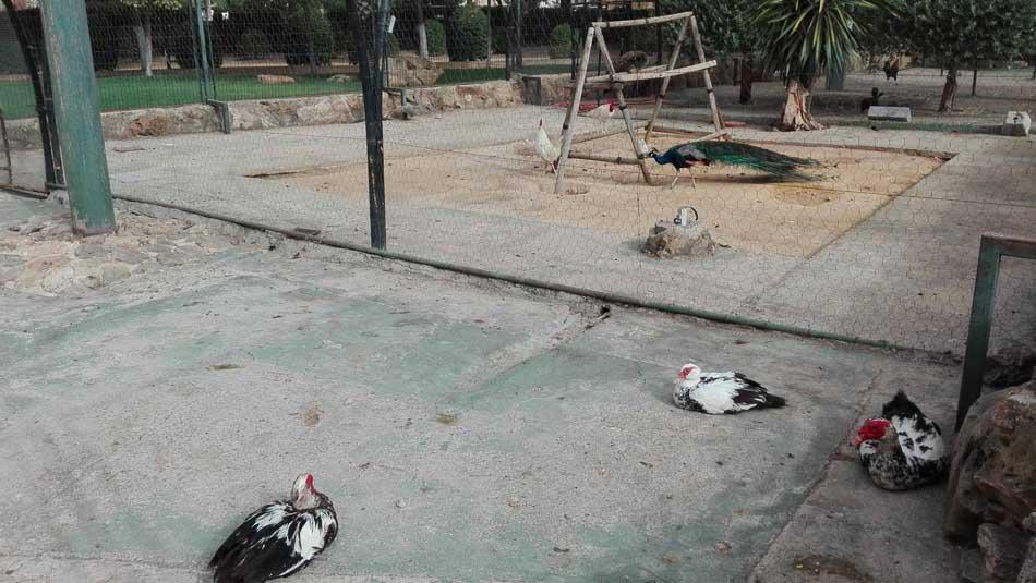 zoologico parque consolacion utrera